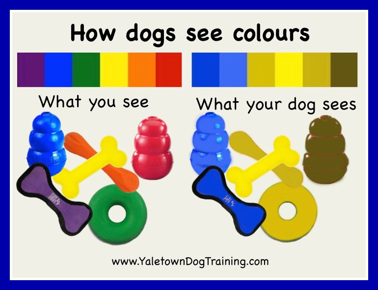 How Do Cats And Dogs See Humans