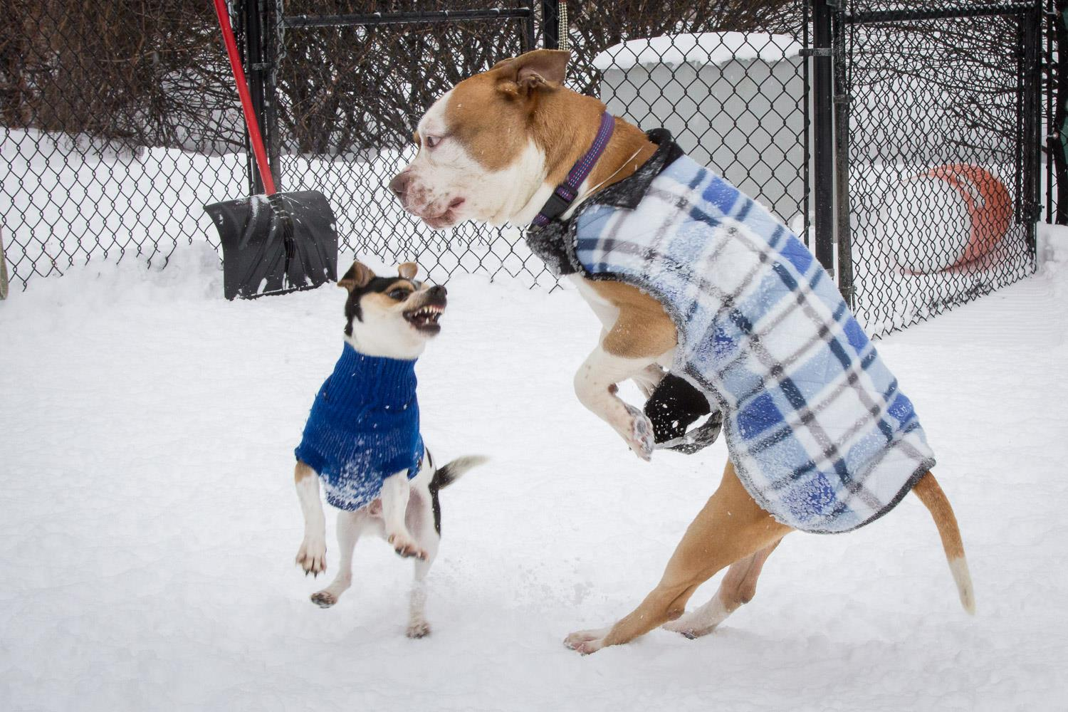 Snow Jackets For Small Dogs
